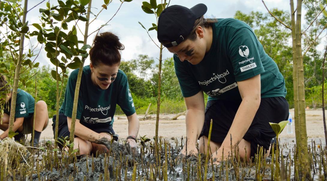 Volontärer i Thailand planterar mangrovesticklingar, som en del i vårt naturskyddsarbete och vårt klimatkompensationsprogram.